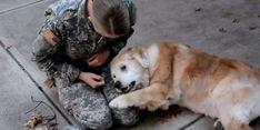Rührendes Wiedersehen von Soldatin und ihrem Hund