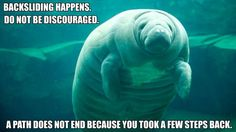 "calmingmanatee:  [IMAGE DESCRIPTION: A manatee facing the photographer, one fin outstretched. TEXT: ""Backsliding happens. Do not be discouraged. A path does not end because you took a few steps back.""](Image credit to ABC News)"
