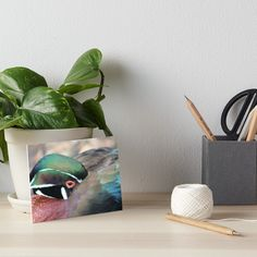 Buy 'Sheltering duck' by chihuahuashower as a Sticker, iPhone Case/Skin, iPhone Wallet, Case/Skin for Samsung Galaxy, Poster, Throw Pillow, Tote Bag, Studio Pouch, Mug, Travel Mug, Art Print, Canvas Print, Framed Print, Art Board, Photogra...