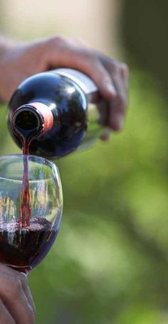 Can I drink wine on the Paleo diet? The Free Paleo diet for weight loss book shares. Grapes And Cheese, Spirit Drink, Just Wine, Under The Tuscan Sun, California Wine, Wine O Clock, In Vino Veritas, Wine Cheese, Wine List