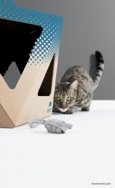 NOOK dots petrol - Cat Cardboard Box