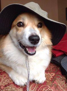 Corgi Charlie in his boonie cap