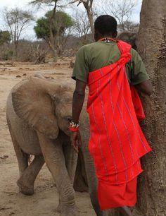 Kenya ~ Diverse & Unique, DSWT http://issuu.com/davidsheldrickwildlifetrust/docs/karibu_kenya/c/sls1q1e
