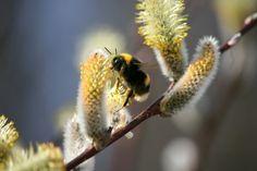 Luonto-Liitto – Nuorten Luonto -lehti   Luonto-Liitto – Nuorten Luonto Spring Awakening, After Dark, Bright Green, Spring Time, Wild Flowers, Finland, Nature, Summer, Blush