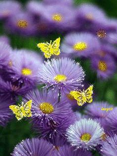 charismatic - My Desktop Nexus Beautiful Flowers Wallpapers, Beautiful Gif, Beautiful Girl Indian, Beautiful Butterflies, Amazing Flowers, Pretty Flowers, Cute Wallpapers, Flower Pictures, Nature Pictures