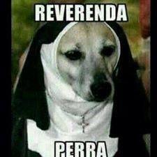Reverenda perra