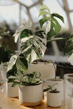 Exotic plants and greenhouse weddings are a match made in heaven! From the minimalist line art on the earth toned invitations to the monstera leaf cake, this inspiration is just what the doctor ordered. Wedding Reception Centerpieces, Flower Centerpieces, Wedding Bouquets, Floral Backdrop, Floral Garland, Winter Wedding Flowers, Floral Wedding, Modern Greenhouses, Flower Factory