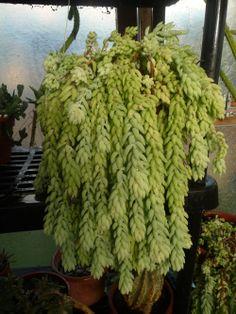 Succulente foto di giuseppina ceraso http://crocettando.wordpress.com