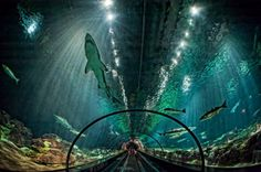 Amazing Places you Should Visit in Your Life - The glass tunnel through the aquarium with sharks in Florida, United States