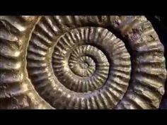 El Universo es Vibración   La Espiral