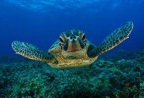 foto subaquática - fantom xp