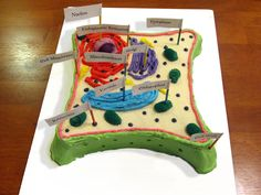 This is a single layer white cake my daughter made for a school project. It's a plant cell. This was only her second cake to make. Not only did she get an A+ but she won first place! Needless to say I was very proud of her. TFL.