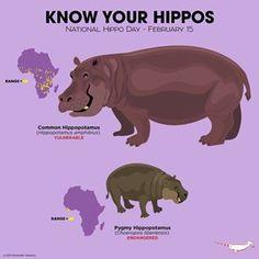 Know Your Hippos Extinct Animals, Zoo Animals, Animals And Pets, Fun Facts About Animals, Animal Facts, Wild Life, Animals Information, Prehistoric Creatures, Animal Species