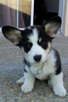 I need a cute puppy to complete my apartment... This one will do :)