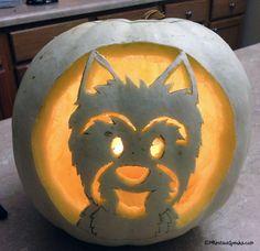 Pumpkin Westie