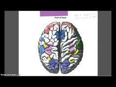 Students put together a map of the brain as it responds to different stimuli | BetterLesson