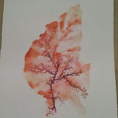 Seaweed watercolour