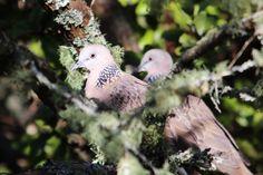 Bird feeders might help invasive species displace native birds.
