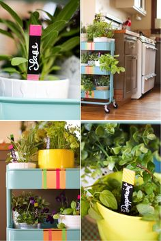 A rolling herb garden   neon plant markers
