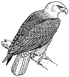 Bald Eagle Coloring Pages To Print