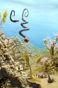La biota de un arrecife cámbrico (Cámbrico, 520mA) (Eugene Parnell)