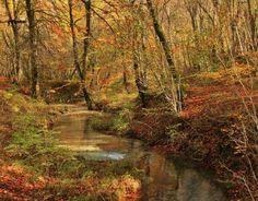 automne. sous-bois de la commune de Val-Suzon, Côte-d'or, Bourgogne, France