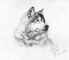 sketches | Pencil Sketches (Old)