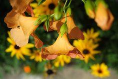 [2012.10.15] 관곡지의 노란 꽃 X-Pro1    후지필름 3기 객원리포터 한국외대 정성재 님의 작품입니다.    관곡지에서 담아온 아름다운 노란 꽃 사진인데요.    자연스러운 아웃포커싱으로 꽃이 부각되면서     노란 꽃의 향기까지 진하게 다가오는 듯 합니다.^^    <사진정보>    조리개값: F/4  노출시간: 1/1000초  ISO감도: ISO-200  초점거리: 35mm    http://blog.naver.com/fujifilm_x/150144894419