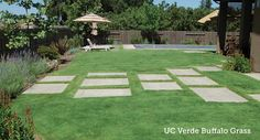 Replacing A Thirsty Lawn With Sustainable Low Water Landscaping Plants Front