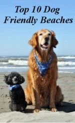 any dog friendly beach were poop is picked up