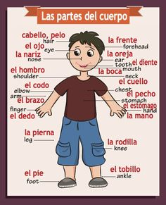 The funds raised by this product go to support a Spanish program for elementary kids - BeLingual Kids. We appreciate your support.  Download file and print on your copier or take to a print shop. Can print on 8.5 x 11 or 11x17 (finished size can print up to 22 x 30 and still be sharp) Please be English Classroom Posters, Spanish Classroom Activities, Preschool Spanish, Learning Spanish For Kids, Spanish Lessons For Kids, Spanish Posters, Spanish Basics, Spanish Teaching Resources, Spanish Lesson Plans
