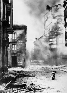 A street in the Spanish town of Guernica after German bombing and the victory of the Nationalist rebel troops. A dog wandering through the ruins…