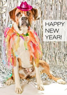 Happy New Year from all of us at Dog Milk! We'll see your bright faces and wagging tails back here on January Photo: Beyonce is a two-year-old female Boxer And Baby, Boxer Love, Happy New Year Funny, Dog Names Unique, New Year Post, Dog Logo Design, Dog Calendar, Dog Milk, Cartoon Dog