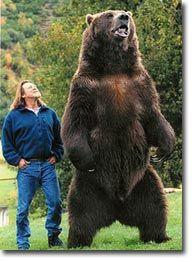 Kodiak Bear Can you say BIG bear.