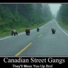 .~* bears *~.