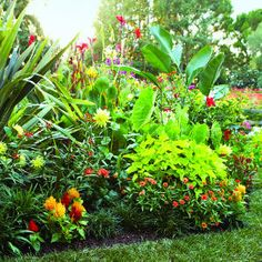 landscape designer Karen Donnelly combined coral, fiery orange, red, and yellow flowers with lime green and deep green tropical foliage.    A pot filled with elephant's ear and potato vine adds height and structure to the planting. In cold-winter areas, build the border for just a season, then start over next year. Or move the most valuable plants indoors for winter. You can also substitute hardy look-alikes, such as Japanese banana and honey bush, for true tropicals.