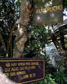 No hay amor más grande que aquel que da la vida por sus amigos.  Una hermosa fotografía que pude tomar en donde se une el árbol llamado cucurucho y un letrero con el más hermoso significado de Amor  René González