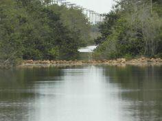 The Everglades!