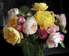 10 Fascinating Things You Didn't Know About Roses  - Veranda.com