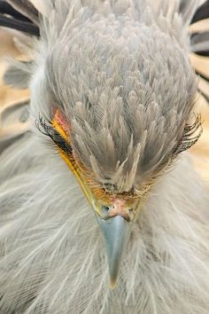 Beautiful eyelashes on this bird