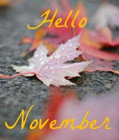 Hello November ⋆ Ok, Dani Welcome November, Sweet November, Hello November, Welcome Fall, Seasons Months, Days And Months, Fall Months, Months In A Year, New Month Greetings