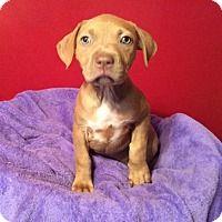 Adopt A Pet :: Virginia - Acworth, GA