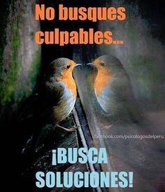 No busques culpables. www.oasisgonzalogallo.com