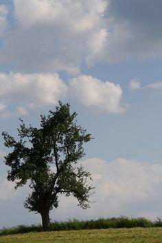 Baum by Daniela 28, via Flickr