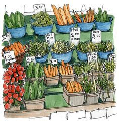 a charming illustration of fresh vegetables - one of 8 picks for this week's Friday Favorites Watercolor Food, Watercolor Illustration, Moleskine, Food Sketch, Cartoon Sketches, Food Drawing, Urban Sketching, Art Journal Inspiration, Art Journal Pages