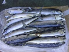 Mackerel fish frozen Thailand process ensures the freshness quality of the fish even after being delivered to the customers. The best frozen mackerel is that flash frozen immediately after caught and even better with rapid freezing process.