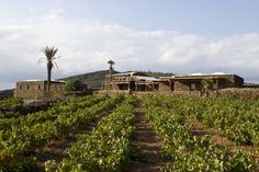 WineTaste » Nuovi guai giudiziari per Mannino, indagato per la cantina di Pantelleria. E' abusiva?