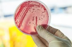 New Drugs May Come from Microbes in Our Guts The microbes that live in our gut could prove to be a fertile source for new antibiotics and other useful drugs [The Future of Medicine: http://futuristicnews.com/tag/future-medicine/]