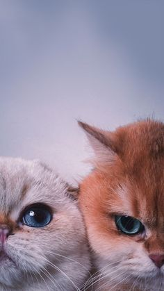 Pin by Sujata Panda on Обои для телефона   Cat wallpaper, Kitten wallpaper, Cute cat wallpaper