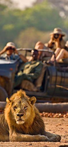 <3Safari in Africa<3